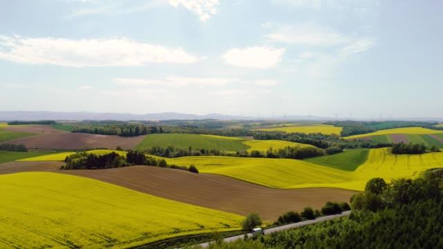 stockvideo's en b-roll-footage met canola veld, panorama tarwe veld luchtfoto platteland in de morgen - floral line