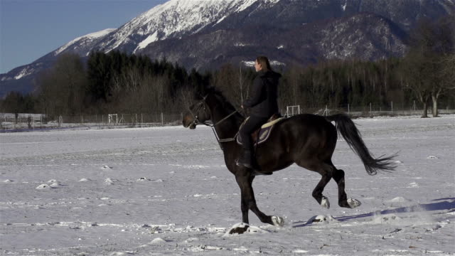 slow motion: cantering on a snowy field - horseshoe stock videos & royalty-free footage