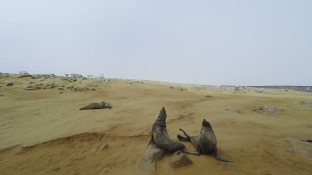 Cape Cross seal colony on the atlantic coastline of Namibia, Africa. Cape Cross seal colony on the atlantic coastline of Namibia, Africa. swakopmund stock videos & royalty-free footage