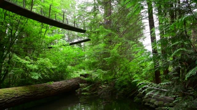 capilano suspension bridge park in north vancouver - дикая местность стоковые видео и кадры b-roll