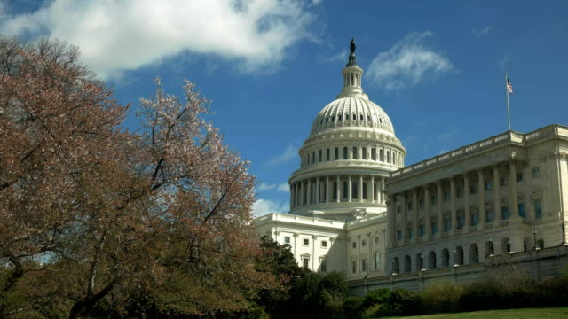 capitol building and flowering cherry trees in washington dc - capitello video stock e b–roll