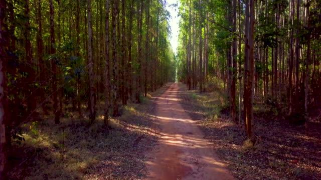fångst av eukalyptusskog - eucalyptus leaves bildbanksvideor och videomaterial från bakom kulisserna