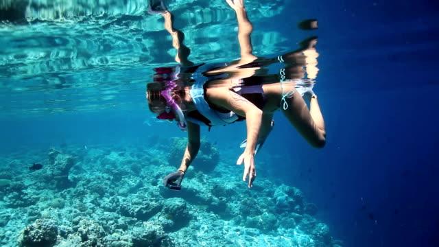 vídeos y material grabado en eventos de stock de capturar underwater belleza de recuerdos increíbles - tubo