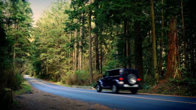 Car And Pickup Drive Through National Park video