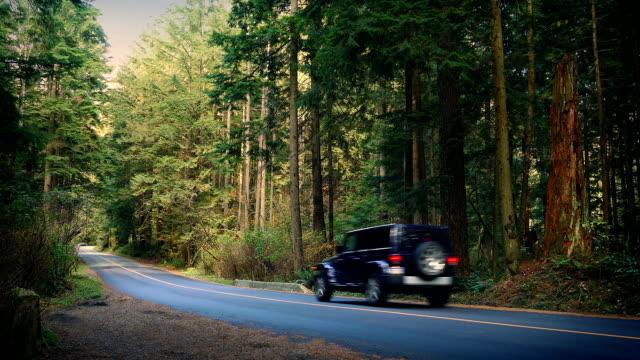 noleggio e il ritiro in auto attraverso national park - passare davanti video stock e b–roll
