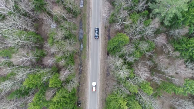 Car chase aerial Through the spring forest chasing stock videos & royalty-free footage