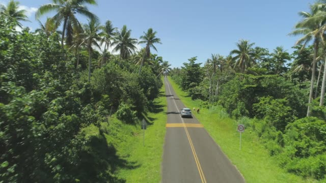 AERIAL: Car drives along narrow asphalt road surrounded by lush exotic nature. video