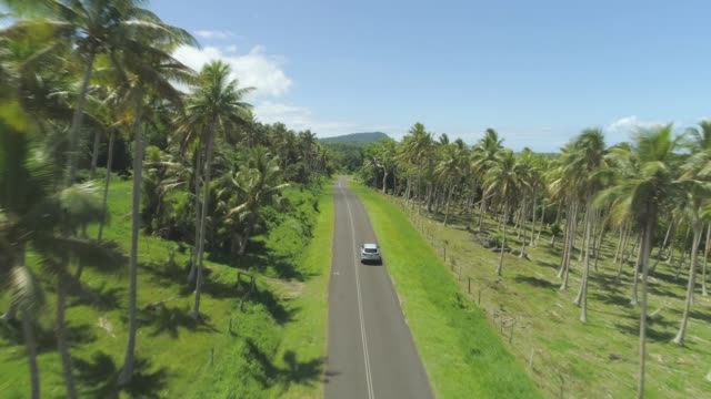 AERIAL: Car drives past idyllic palm tree plantation and lonely hut on sunny day video