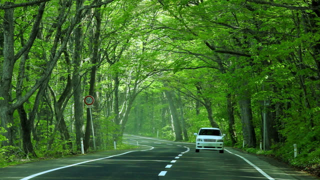 Car driving on green forest road video