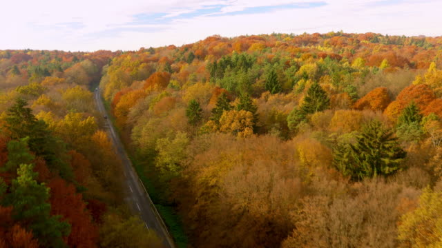 AERIAL Car driving through a forest in fall Aerial shot of a car driving on a country road through forest in fall. Slovenia. country road stock videos & royalty-free footage