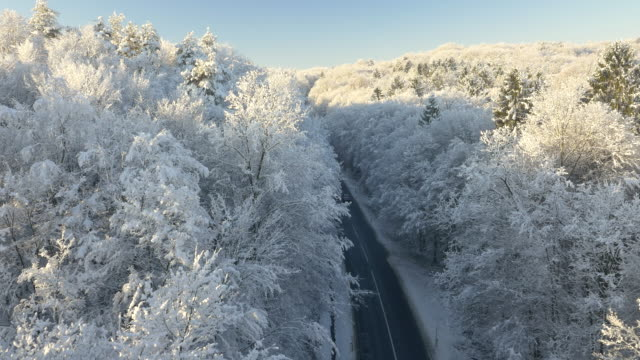 AERIAL Car driving through the wintry forest