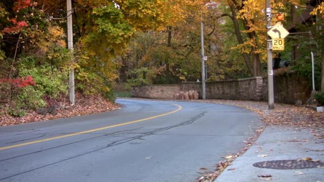Car goes around corner. Autumn in Toronto. video
