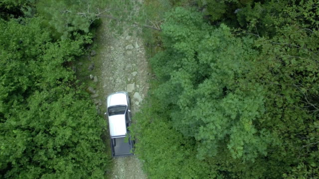 Car going through the beatiful forest, aerial shooting video