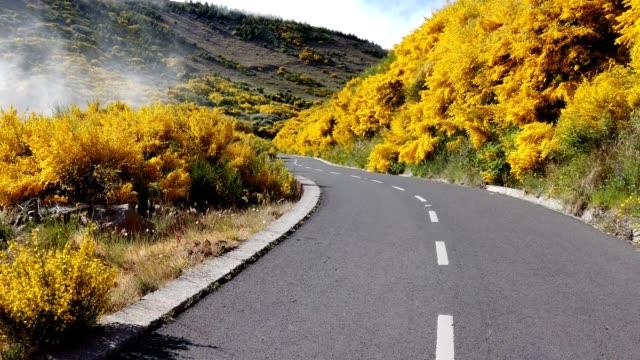 vídeos de stock e filmes b-roll de car progressing on an asphalt road between yellow flowers - ilha da madeira