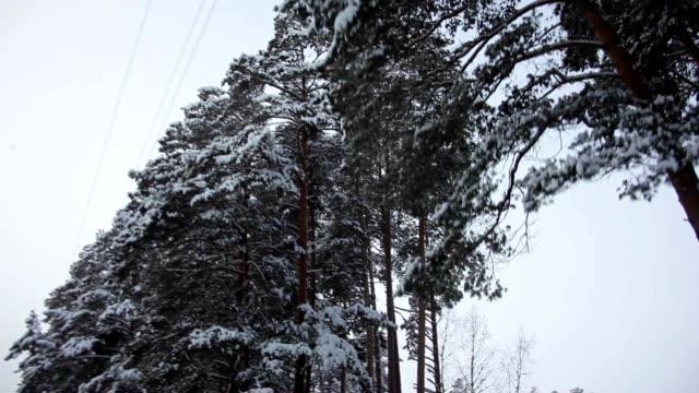 Car Road in the Winter Wonderland video