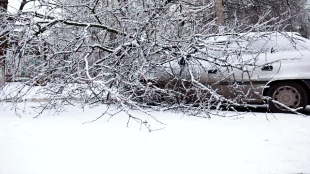 Car under fallen tree in winter video