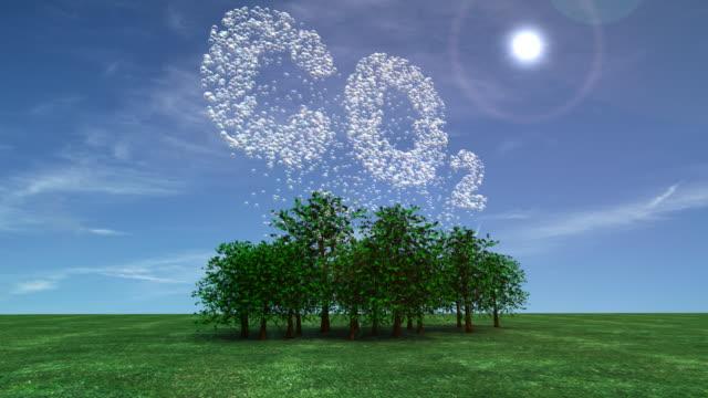 Captura de carbono-Fotossíntese - vídeo