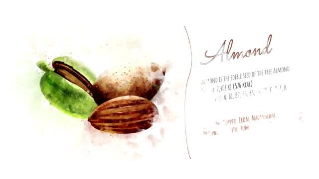 vídeos de stock e filmes b-roll de card about the energy value of almonds - amendoas