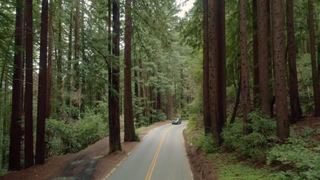 Card driving on the road in the forest of Sequoias in Northern California, USA West Coast
