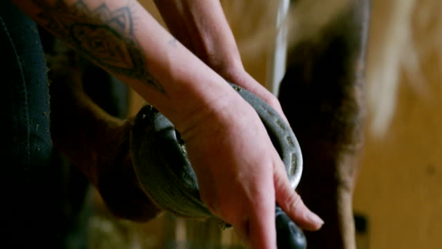careful young woman cleans the hooves of a horse in a stall - horseshoe stock videos & royalty-free footage