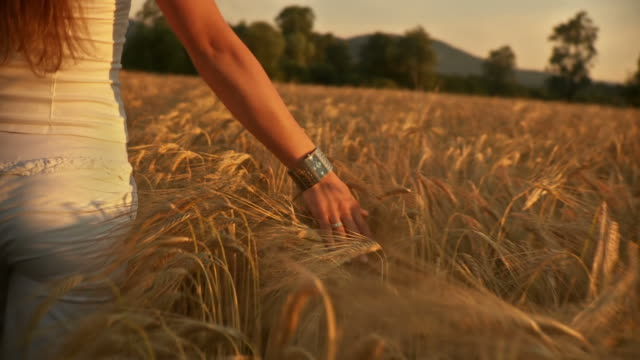 HD: Caressing The Wheat video