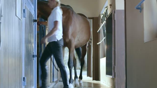 vídeos de stock e filmes b-roll de ds guarda levando baía cavalo na caixa estável - celeiro