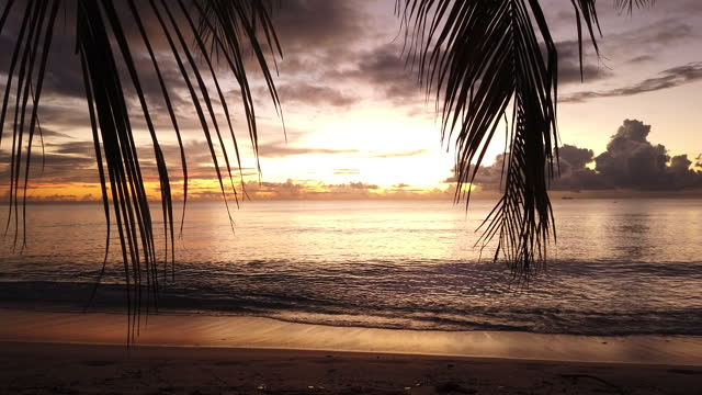 Caribbean sunset through the palm trees on the beach (3) video