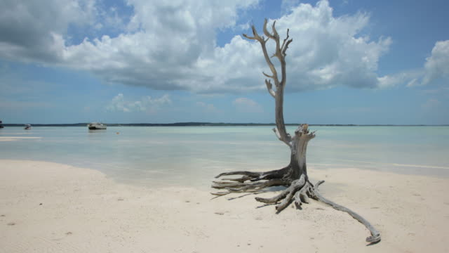Caribbean Time Lapse, Girls Bank Bay, Harbour Island, Bahamas, Afternoon, High Tide video
