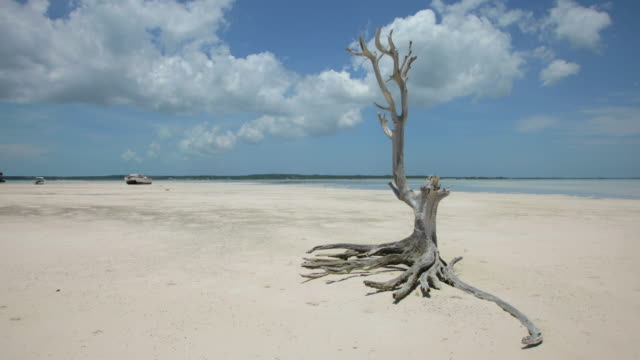 Caribbean Time Lapse, Girls Bank Bay, Harbour Island, Bahamas, Midday, Mid-tide video