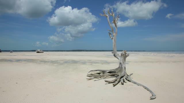 Caribbean Time Lapse, Girls Bank Bay, Harbour Island, Bahamas, Morning, Low Tide video