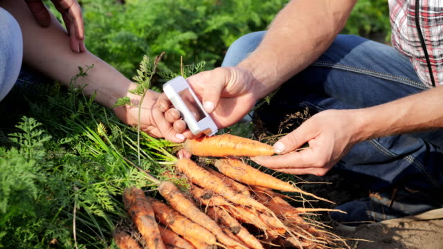 Carrot Analysis On Nitrates And Radiation video