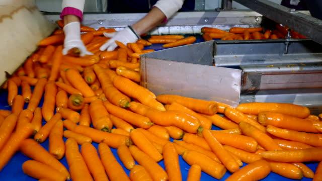 carrots in food processing plant - завод по переработке пищевых продуктов стоковые видео и кадры b-roll