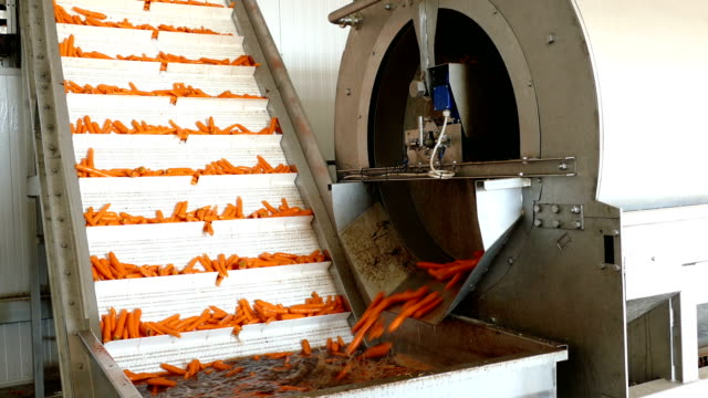 Carrots in food processing plant Carrots sorting and packing factory automated processing machine for washing in water, close up carrot stock videos & royalty-free footage