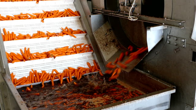 carrots in food processing plant - agricultural machinery stock videos & royalty-free footage