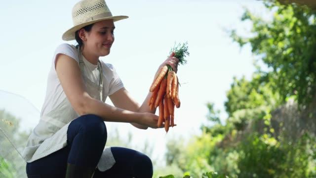 carrots, ready to be eaten - attività agricola video stock e b–roll