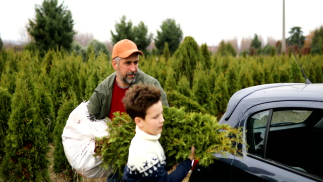 Carrying christmass tree to the home