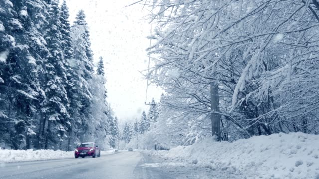Cars Drive Through Forest In Snowstorm