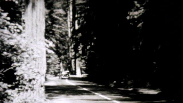 Cars Driving Through Redwood Forest-1940 Vintage 8mm film