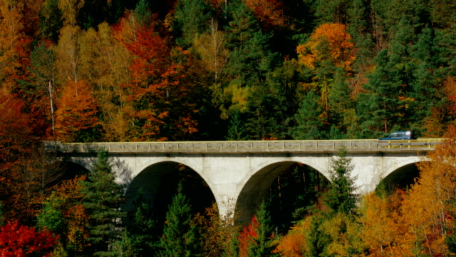 Cars moving on arch bridge through autumn forest video