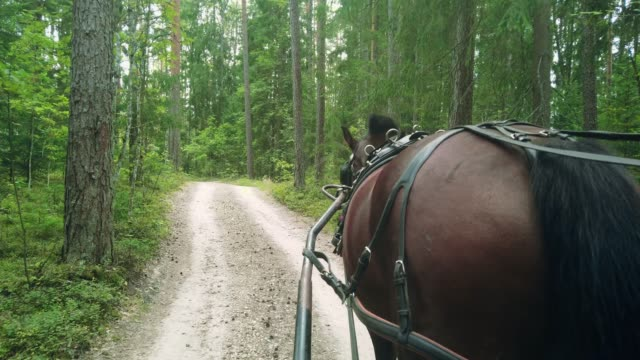 A cart with a horse drives through the forest on the road, view from the passenger seat, on an open road without people.