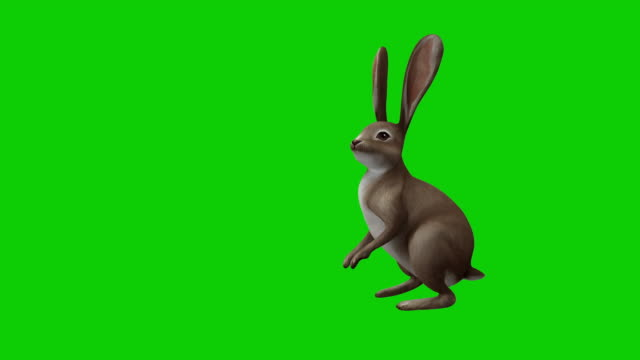 Cartoon rabbit on chroma and with alpha channel