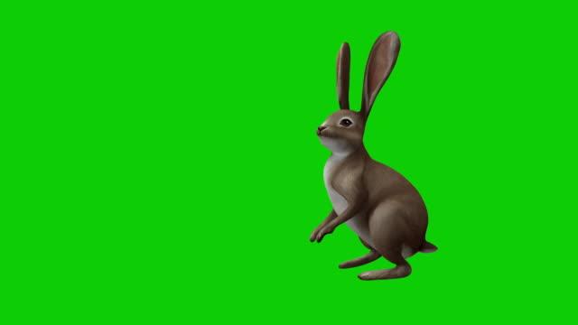 çizgi film tavşanı üzerinde kroma ve alfa kanallı - tavşan hayvan stok videoları ve detay görüntü çekimi