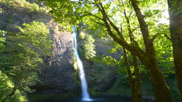 vídeos de stock e filmes b-roll de cascata de cascata em floresta - ronaldo
