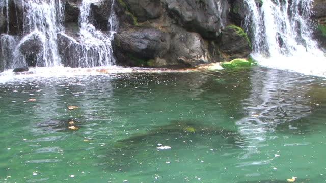 vídeos y material grabado en eventos de stock de hd: cascades (vídeo - sea life park