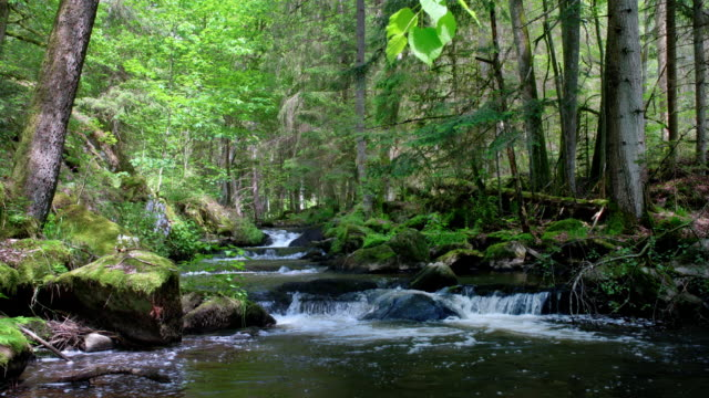 Kaskaden-Strom im Frühlingswald – Video