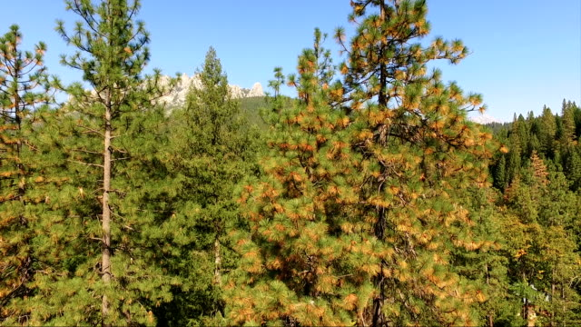 Castle Crags State Park California Mount Shasta Trinity National Forest video