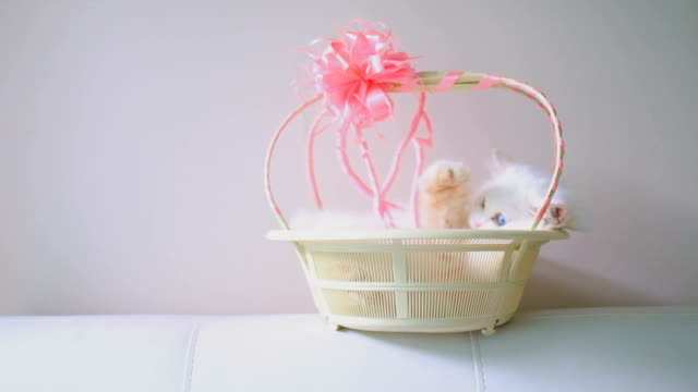 Cat and Basket video