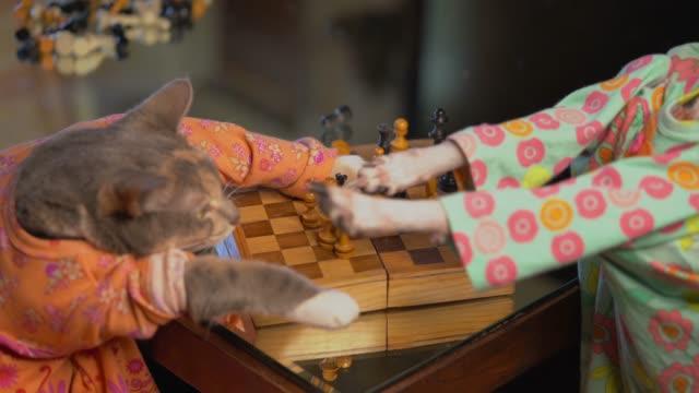 katze und hund spielen schach zusammen in kleidern und bekommen im kampf um sieger - könig schachfigur stock-videos und b-roll-filmmaterial