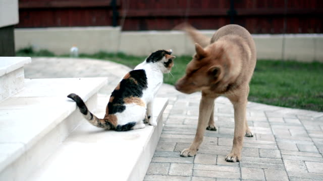 Cat and dog playing in the yard