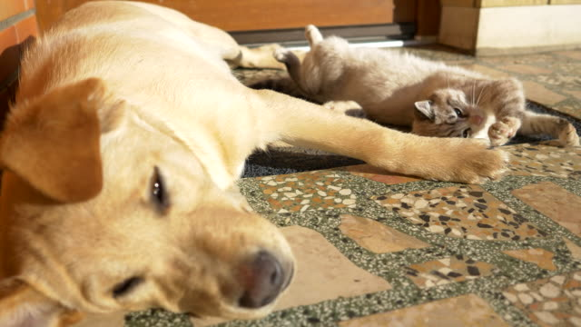 MS Cat And Puppy Lying Together